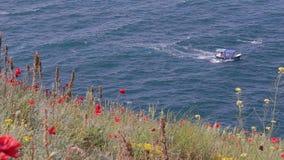 Röda vallmo nära det blåa havet som blåser i en mjuk bris fartyg lager videofilmer