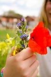 Röda vallmo och annan fältblommabukett Royaltyfri Fotografi