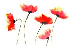 Röda vallmoblommor, vattenfärgillustratör Royaltyfri Foto