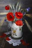 röda vallmor Royaltyfria Bilder