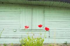 röda vallmor Arkivfoto