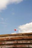 röda vallmor Fotografering för Bildbyråer