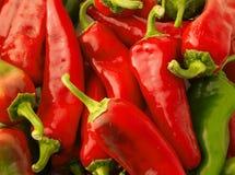 röda varma peppar för bakgrundschili Royaltyfria Bilder