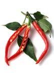 röda varma peppar för chili Royaltyfri Foto