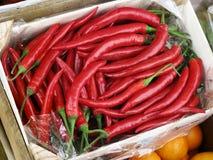 röda varma peppar för chili Arkivfoto