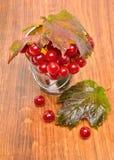 Röda viburnumbär i exponeringsglaset Royaltyfri Foto