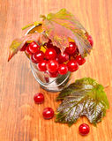 Röda viburnumbär i exponeringsglaset Royaltyfri Bild