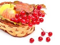 Röda viburnumbär och moget äpple i korgen Royaltyfri Foto