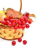 Röda viburnumbär och moget äpple i korgen Fotografering för Bildbyråer
