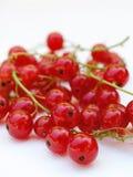 röda vinbär 1 Royaltyfri Foto