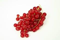 röda vinbär Arkivbild