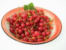 röda vinbär för bunke Royaltyfri Bild