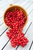 Röda vinbär i en bunke Fotografering för Bildbyråer