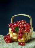 Röda vinbär i en träkorg Arkivfoto