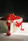 Röda vinbär i ett korgslut upp Royaltyfri Foto