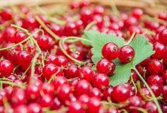 Röda vinbär, organisk röd bärbakgrund Arkivfoton