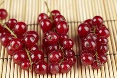 Röda vinbär på ett mattt sugrör Fotografering för Bildbyråer
