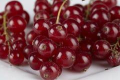 Röda vinbär som ligger på en platta - nära övre Royaltyfria Foton