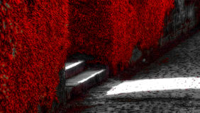 röda vines Royaltyfria Foton