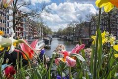 Röda, vit- och gulingblommor på kanalen i Amsterdam med fartyg, byggnader och vatten som bakgrund Fotografering för Bildbyråer
