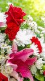 Röda vita blommor för ros och i bukett arkivfoton