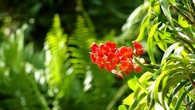 Rödaktig orkidé på gräsplanen lager videofilmer