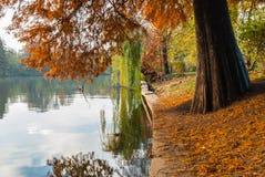 Rödaktigt bladträd nära sjön Pil reflekterad i vattnet in royaltyfria bilder