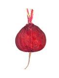 rödbetaavsnitt Royaltyfri Foto