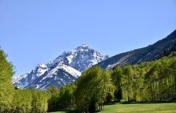 Rödbruna Klockor i Maj lokaliserade i Colorado nära asp fotografering för bildbyråer