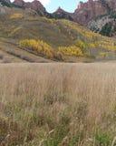 Rödbruna Klockor, Mountain View Arkivfoto