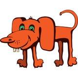 Rödhårig hund Royaltyfri Fotografi