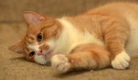 Rödhårig man med den vita katten arkivbilder
