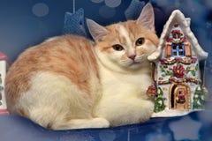 rödhårig man med den vita ledsna hemlösa kattungen och jul arkivbild