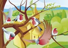 Rödhake i träd vektor illustrationer