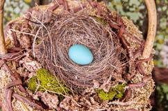 Rödhakes ägg och rede i en korg Royaltyfri Bild