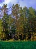 Röjning för säsongsommarskogen fördunklar himmelpanorama Arkivbilder