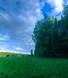 Röjning för säsongsommarskogen fördunklar himmelpanorama Royaltyfri Bild