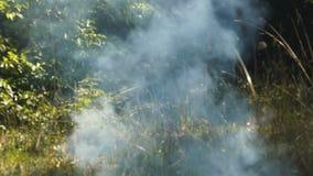 Rök i skogen stock video