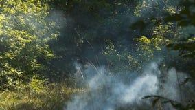 Rök i skogen lager videofilmer