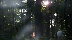 Rök i skogen arkivfilmer