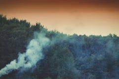 Rök i skogen royaltyfri bild