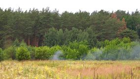 Röka en brand i skogen stock video