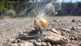 Röka frukt Arkivbilder