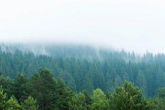 Röka sörjer blått trän efter ett tungt häftigt regn royaltyfria foton