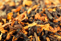 Rökande tobak royaltyfri foto