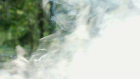 Röken från branden i skogen stock video