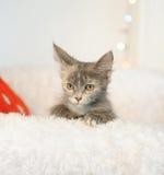 Rökig ovanlig härlig katt i en inre för ` s för nytt år color den abstrakt julen för beröm för bakgrundsbakgrunder blurr suddighe Arkivfoton