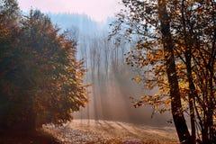 Rökig skog royaltyfri foto