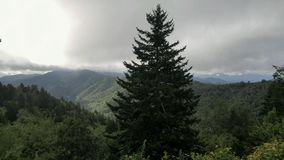 Rökigt bergträd Arkivbilder