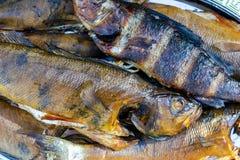 rökt varmt för fisk rök meat rökte Rökt fisk Röka rum som lagas mat på insatsen perch rökt bakgrundsfisk royaltyfri foto